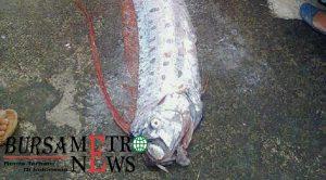 Nasib Ikan Mitos Pertanda Gempa yang Hebohkan Tempat Pelelangan