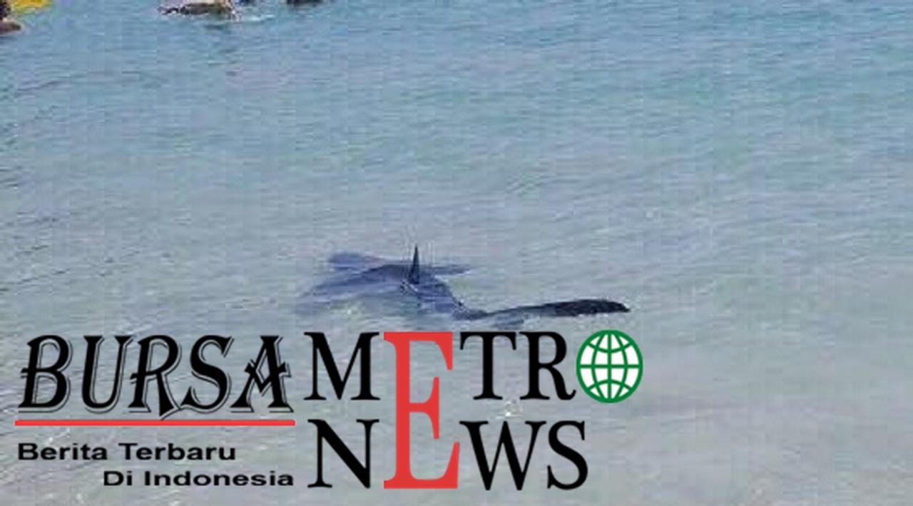 Geger Hiu Biru Berenang di Pantai Spanyol yang Penuh dengan Turis