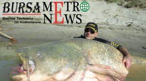 5 Pria India Ditangkap Usai Santap Lele Monster Seberat 125 Kg