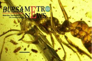 Ajaibnya Anatomi Semut Kuno Bisa Menghisap Darah Seperti Vampir