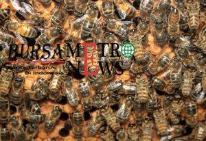 Lebah Merupakan Binatang Pintar Ini Buktinya