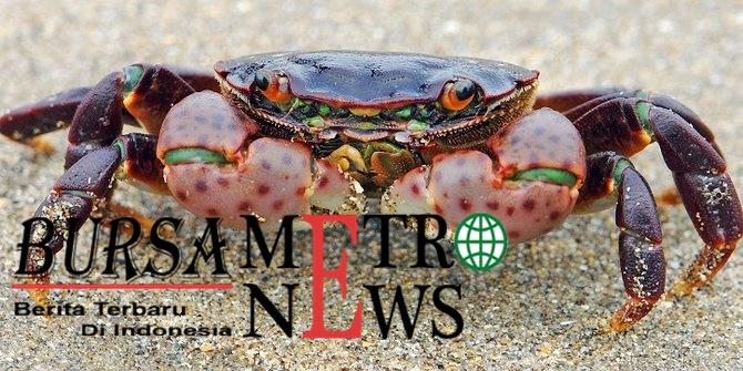 Upaya penyelundupan ribuan kepiting ke Malaysia digagalkan pemilik kabur