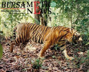Hewan di Indonesia yang Sudah Punah dan Hampir Punah
