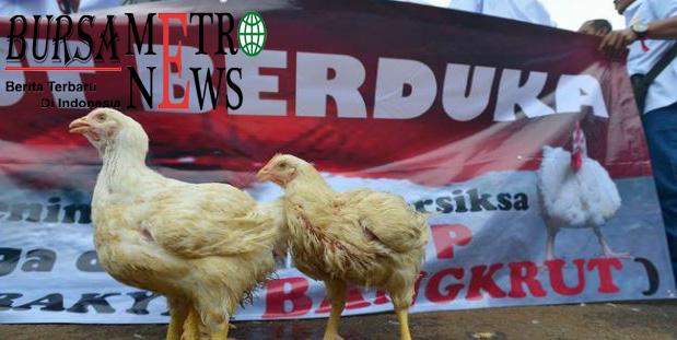 Harga Ayam Anjlok, Peternak Ancam Turun ke Jalan