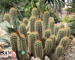 http://www.bursametronews.com/mitos-atau-fakta-tanaman-ini-dipercaya-sebagai-penangkal-gangguan-gaib/